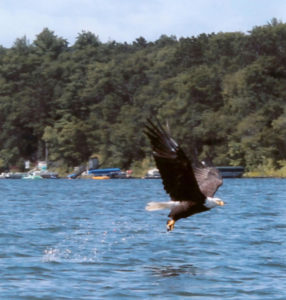 Lucky-Strike-eagle-flying-2