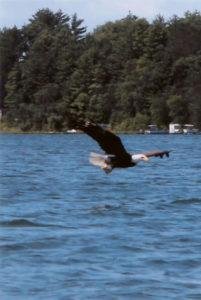 Lucky-Strike-eagle-flying