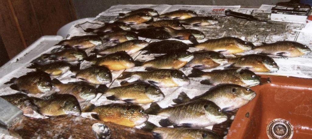 Lucky Strike Resort Great FishingLucky Strike Resort Great Fishing